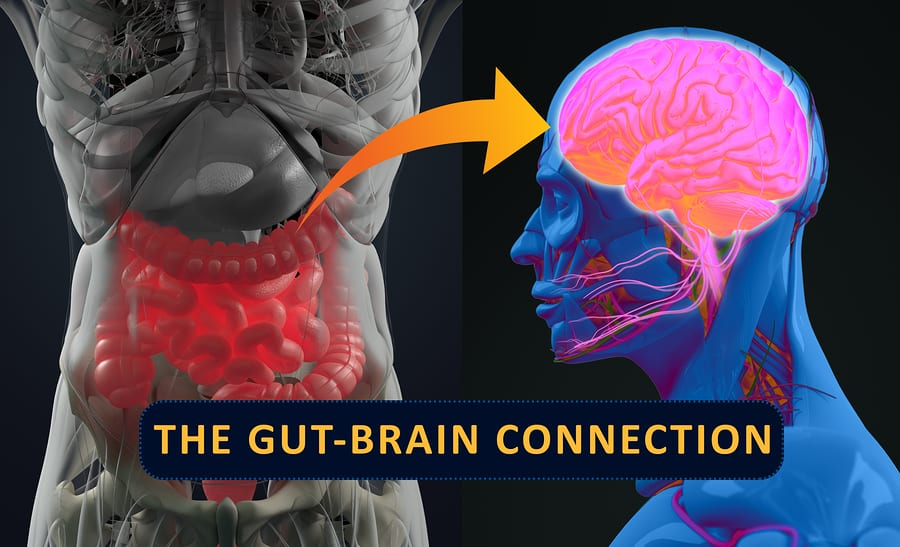 Is There a Link Between Gut Health and Mental Health?